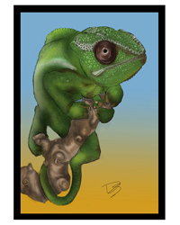 Picture of Creative Chameleon Greetings Card Chameleon
