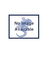 Picture of Blue Lizard Hatchling Snake Starter Kit
