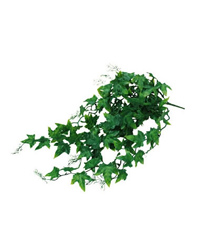 Picture of Lucky Reptile Ivy Bush