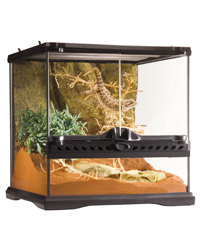 Picture of Exo Terra Glass Terrarium Mini Wide 30 x 30 x 30 cm