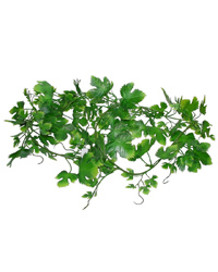 Picture of Lucky Reptile Grape Leaf Vine