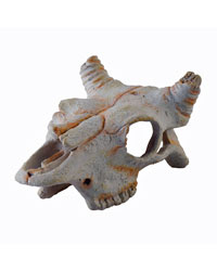 Picture of Exo Terra Buffalo Skull Small