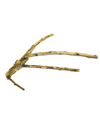Picture of ProRep White Acacia Branch X Large