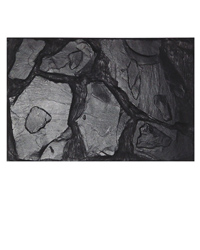 Picture of Lucky Reptile Background Altamira 58 x 38 cm