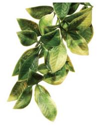 Picture of Exo Terra Plastic Plant Mandarin Large