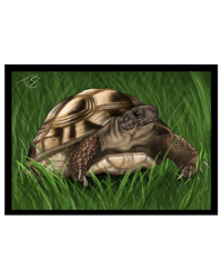 Picture of Creative Chameleon Greetings Card Tortoise