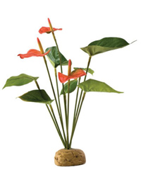 Picture of Exo Terra Anthurium Bush