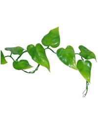 Picture of Lucky Reptile Pothos Vine