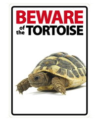 Picture of Beware of the Tortoise Sign