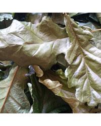 Picture of Decorative Leaf Litter Oak 1 Litre