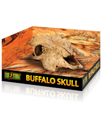 Picture of Exo Terra Buffalo Skull