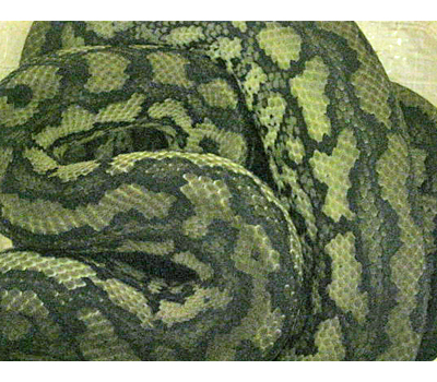 Coastal Carpet Python Uk Carpet Vidalondon
