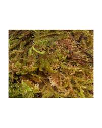 Picture of Blue Lizard Premium Sphagnum Moss 3 Litres