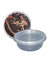 Picture of Euro Rep Redworms Tub