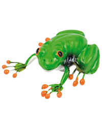 Picture of Blue Bug Magnet Red-eyed Treefrog