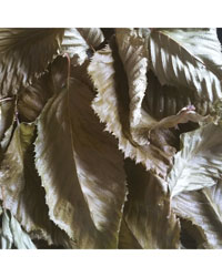 Picture of Decorative Leaf Litter Beech 1 litre