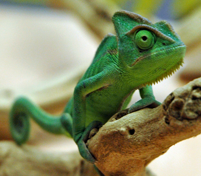 Live Reptile Food Free Delivery