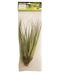 Picture of ProRep Airplant Large Fasiculata