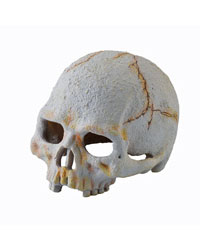 Picture of Exo Terra Primate Skull Small