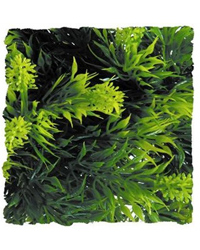 Picture of Zoo Med Malaysian Fern Large 56cm