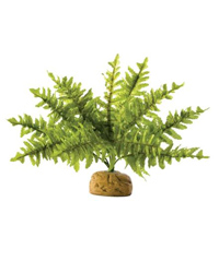 Picture of Exo Terra Boston Fern Small