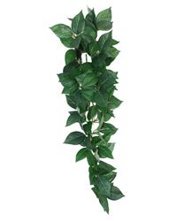 Picture of Komodo Sumatra Hanging Vine 23cm