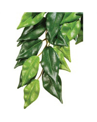 Picture of Exo Terra Silk Plant Ficus Small