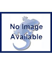 Picture of Blue Lizard Bearded Dragon Starter Kit Basic