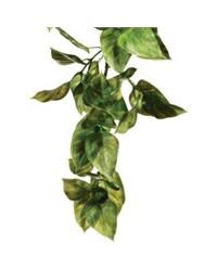 Picture of Exo Terra Plastic Plant Amapallo Small