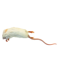 Picture of Frozen Mice Large Size 22-30g - Pack of 100
