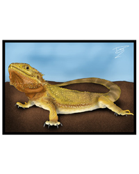 Picture of Creative Chameleon Greetings Card Bearded Dragon