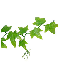 Picture of Lucky Reptile Ivy Vine