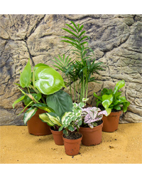 Picture of ProRep Live Plant Mini Jungle Collection - 6 Plants