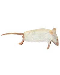 Picture of Frozen Mice Jumbo Size 30g up - Pack of 15