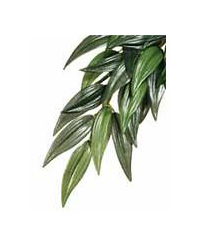 Picture of Exo Terra Silk Plant Ruscus Large