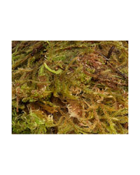 Picture of Blue Lizard Premium Sphagnum Moss 1.5 Litres